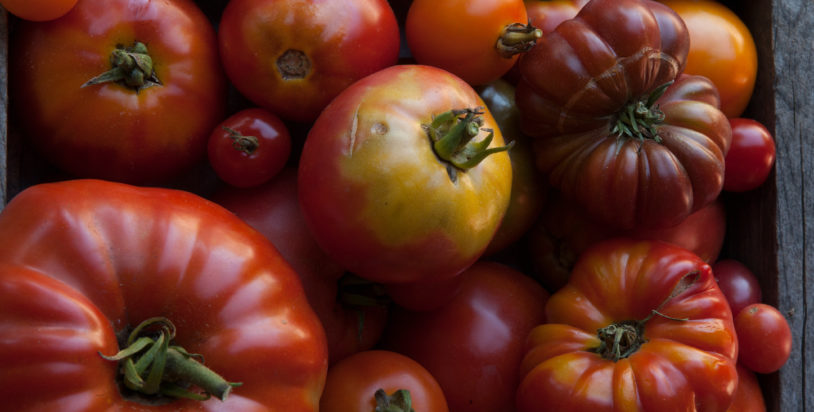 Eat for Your Health: Tomatoes