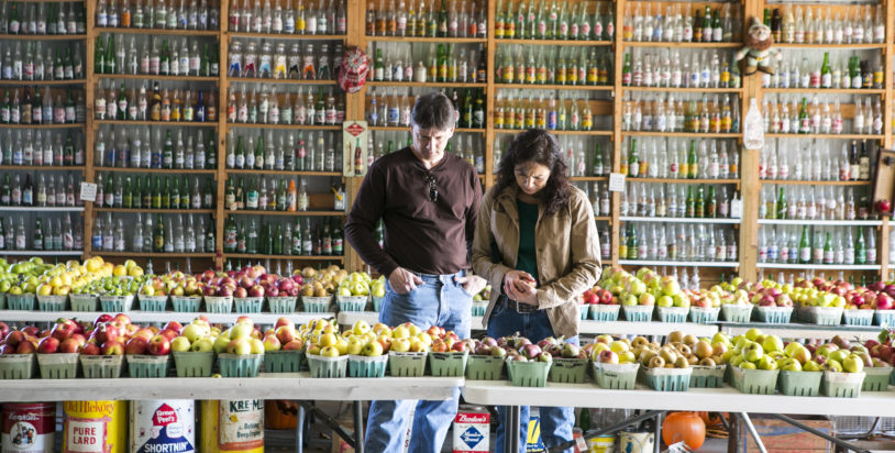 Visit Kilcherman's Christmas Cove Farm for Antique Apples