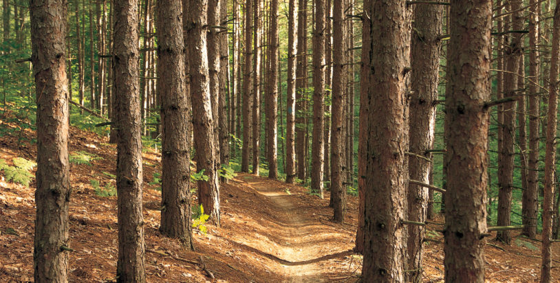Get Outside! 6 Free Guided Hikes in Northern Michigan
